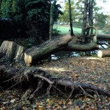 Storm damage, Autumn 2000